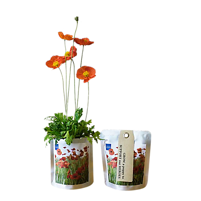 British Legion Poppy Grow Kit